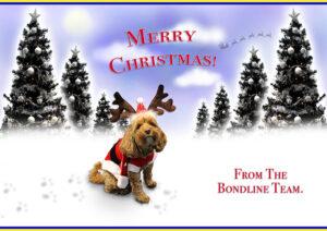 Mollie Christmas Card 2020 | Bondline